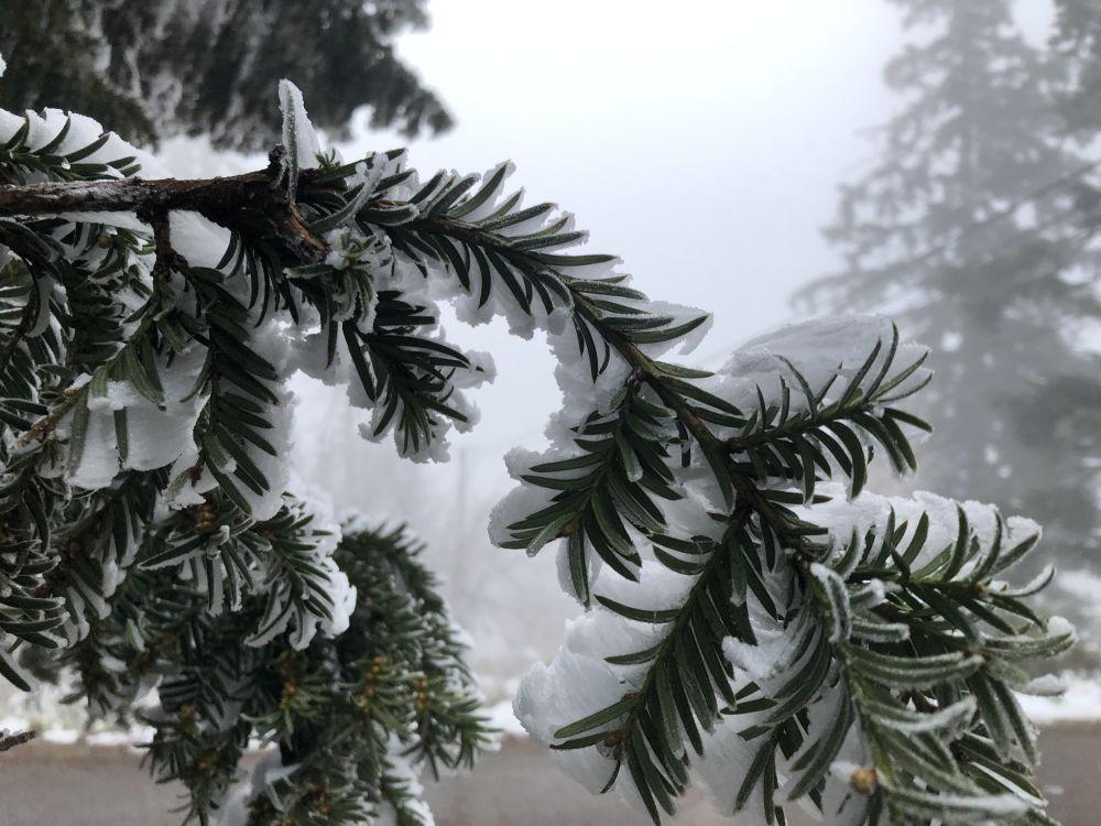Dezember2020 201 - Wintersonnenwende & Weihnachten: Brauchtum & Symbole