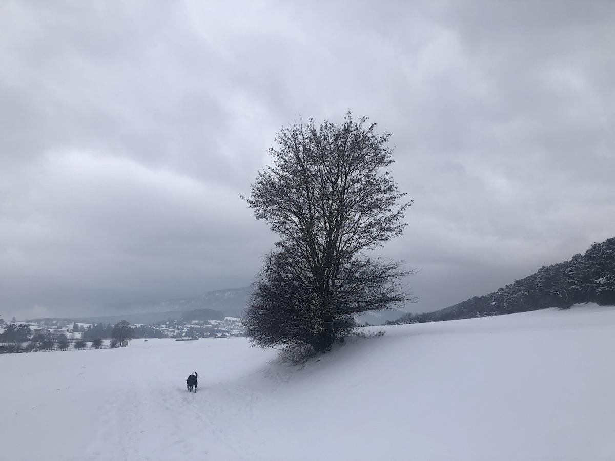 Winterbaum Dreistetten sm - Rauhnachtsbekenntnis zu Lichtmess: Ich wünsche mir den Ehrgeiz eines Baumes
