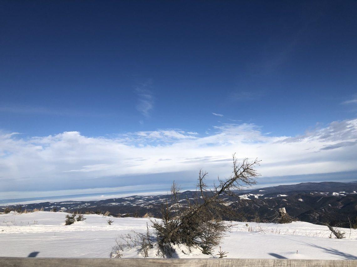 Winterbaum Unterberg2 sm 1140x855 - Rauhnachtsbekenntnis zu Lichtmess: Ich wünsche mir den Ehrgeiz eines Baumes