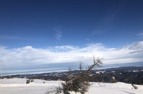 Winterbaum Unterberg2 sm 500x330 - Rauhnachtsbekenntnis zu Lichtmess: Ich wünsche mir den Ehrgeiz eines Baumes