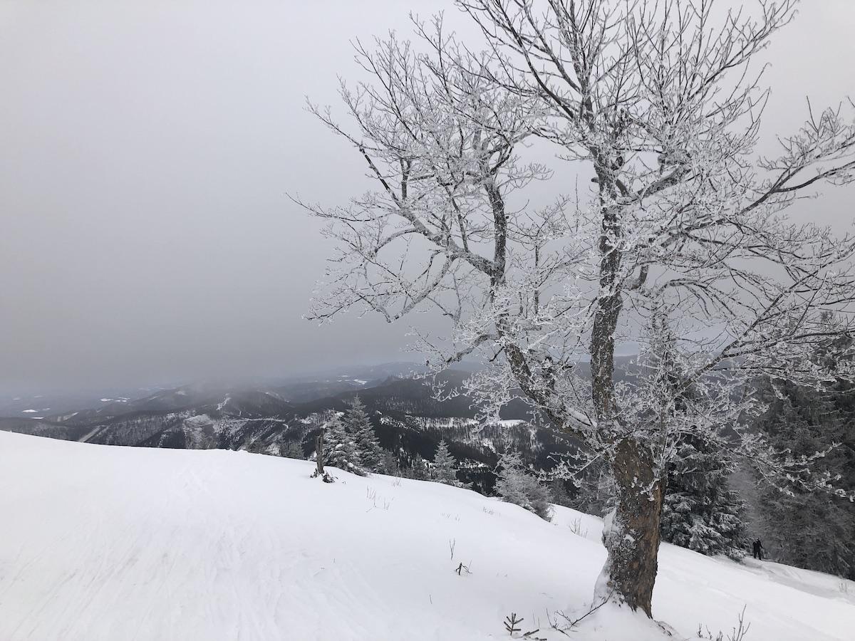Winterbaum Unterberg sm - Rauhnachtsbekenntnis zu Lichtmess: Ich wünsche mir den Ehrgeiz eines Baumes