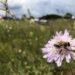 Juni2021 002 75x75 - Bad Aussee: Zwischen Sommerfrische und Ambivalenz