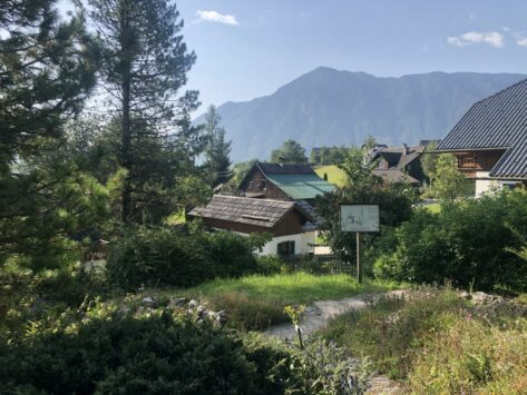 Alpengarten Bad Aussee 2021 012 473x355 - Der Ausseer Alpengarten