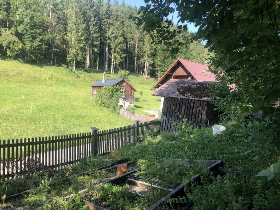 Alpengarten Bad Aussee 2021 022 951x713 - Der Ausseer Alpengarten