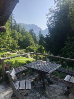 Alpengarten Bad Aussee 2021 030 250x333 - Der Ausseer Alpengarten