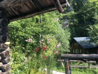 Alpengarten Bad Aussee 2021 031 315x236 - Der Ausseer Alpengarten