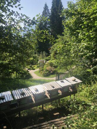 Alpengarten Bad Aussee 2021 049 327x436 - Der Ausseer Alpengarten