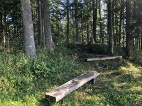 Alpengarten Bad Aussee 2021 057 288x216 - Der Ausseer Alpengarten