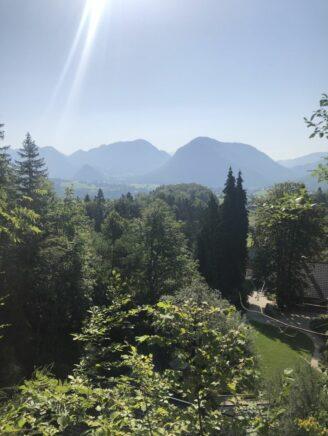 Alpengarten Bad Aussee 2021 058 328x436 - Der Ausseer Alpengarten