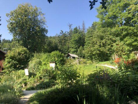 Alpengarten Bad Aussee 2021 065 473x355 - Der Ausseer Alpengarten